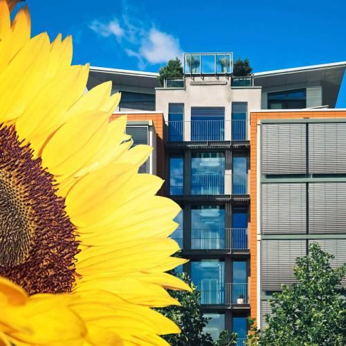 Erik Yevgeniy, CEO: Von der Sonnenblume zur Innovation Wie aus einer Idee das Unternehmen SolarGaps entstand